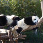 パンダに会いに和歌山 アドベンチャーワールドへ