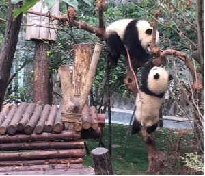 月亭揉めパンダ1