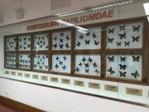 パンダ博物館の蝶展示