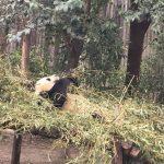 中国 成都 パンダ基地 大熊猫繁育研究基地でパンダ三昧 その2 気になる施設編