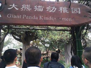 大熊猫幼稚園