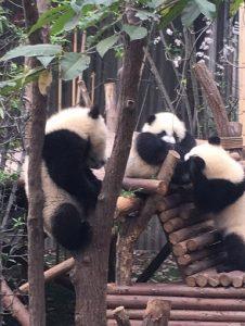 月亭おしゃべりパンダ