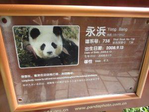 熊猫谷永浜看板