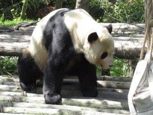 熊猫谷永浜