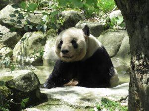 熊猫谷永浜お風呂