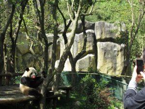 熊猫谷釣りタイム