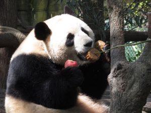 熊猫谷おやつタイム