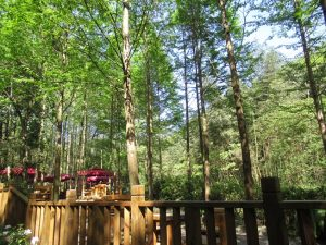 熊猫谷景色