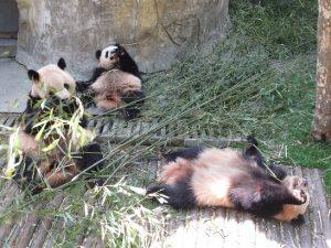 熊猫谷親子