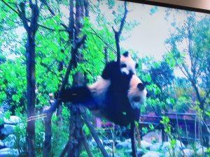 熊猫谷教育村ビデオ