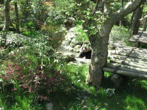熊猫谷永浜の庭