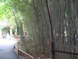 スミソニアン動物園竹林