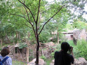 スミソニアン動物園ベイベイの庭