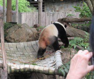 スミソニアン動物園ベイベイ