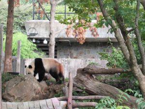 ベイベイスミソニアン動物園