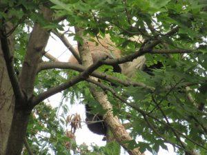 木の上のいるベイベイ