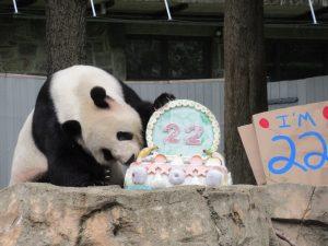 ティエンティエン誕生日ケーキ