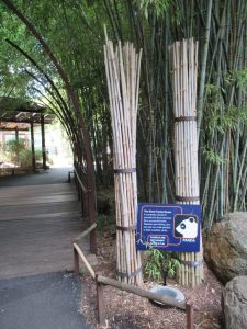 スミソニアン動物園笹林
