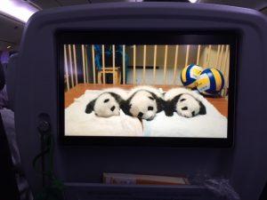 パンダ映画pandas